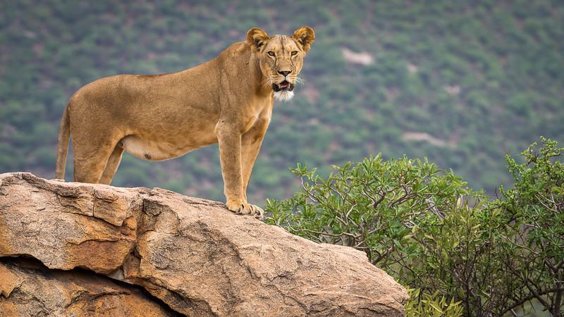 Lions-0107-2.jpg
