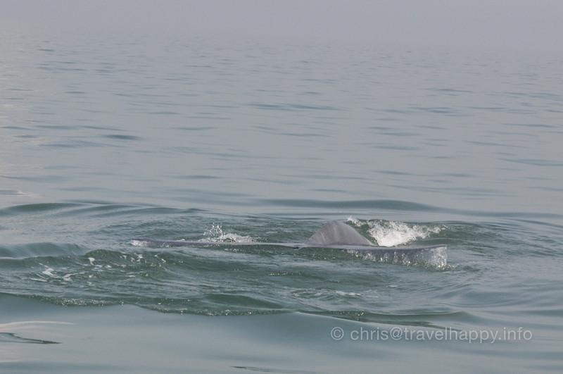 Whale Watching Samut Songkhram