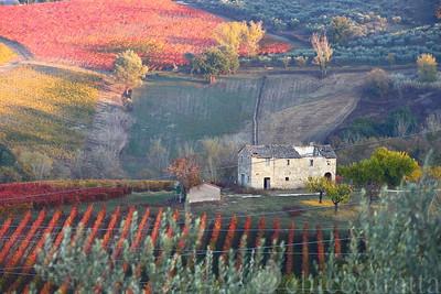 2011/11/01 Colori di vigne a Bevagna e Montefalco