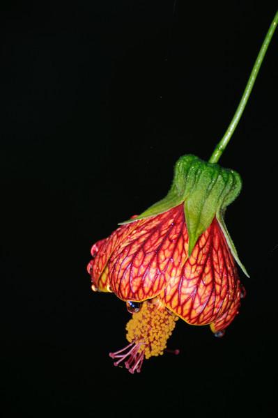 Flora at Sachatamia