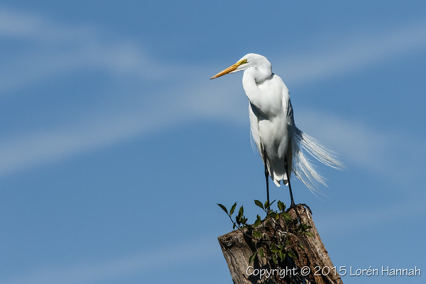 2015 Florida Birds