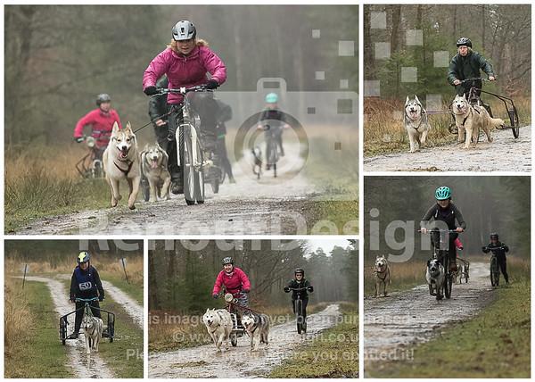 Husky Racing New Forest