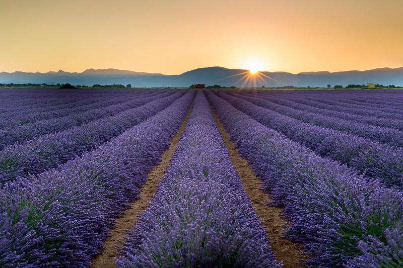 Valensole sunrise