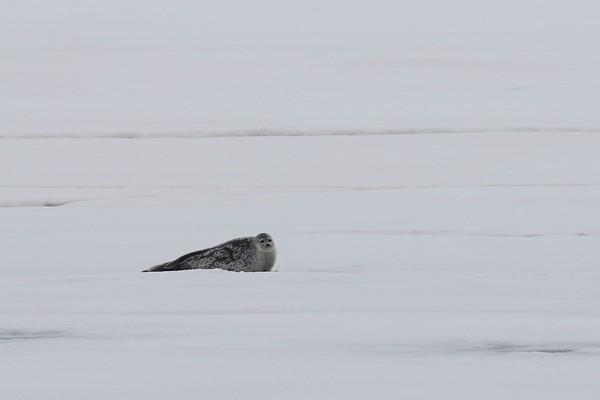 Spitsbergen 2019