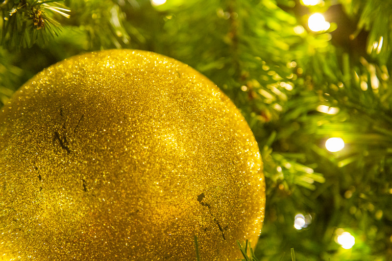 Harbourside Place in Jupiter held their annual Tree Lighting Ceremony on Saturday, November 23, 2019.  [JOSEPH FORZANO/palmbeachpost.com]