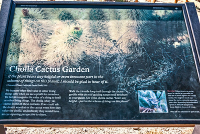 Cholla Cactus Garden - Joshua Tree National Park