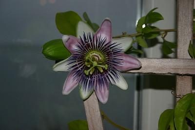 2005_01_08