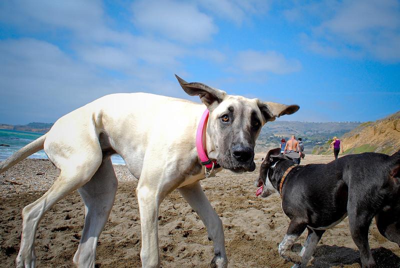 dogs_beach-095.jpg