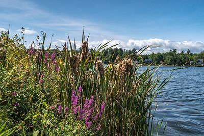 Ballston Lake  2020