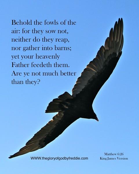 Matthew 6;26  .JPG