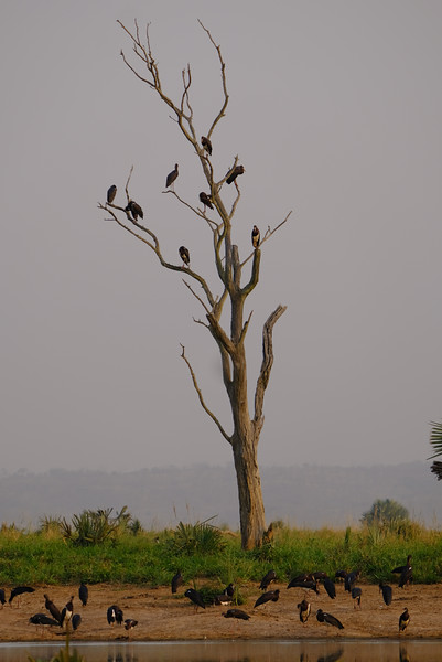 Walking Safari - Nyamsika River