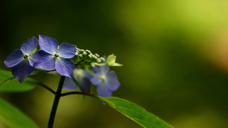Flowers2 1920x1080 (20).jpg
