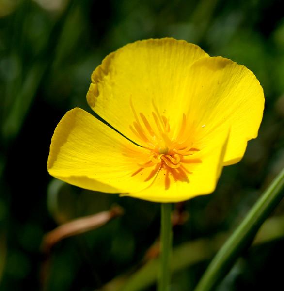 2376 Yellow Flower.jpg