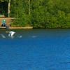 Birds in Flight over Lakeside Lift ©