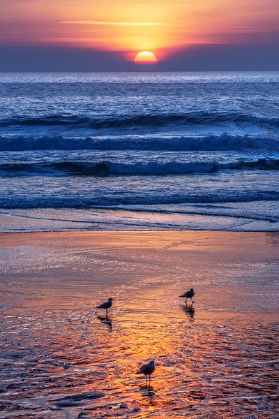 Birds @ Sunset, Sea Ranch, California
