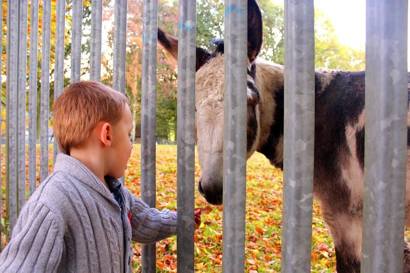 Ty Donkey.JPG