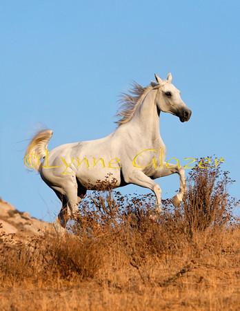 White Horse Ranch