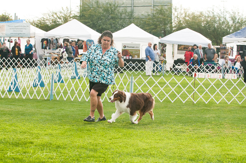 20170114_Kachina Kennel Club_Aussies-49.jpg