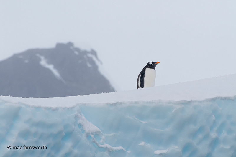 antartica-15-2.jpg