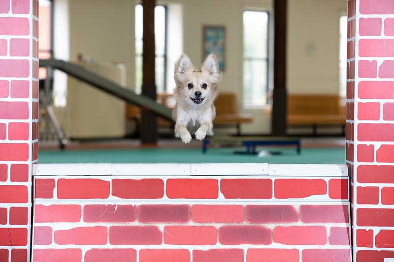 SPCA_Agility-26.jpg