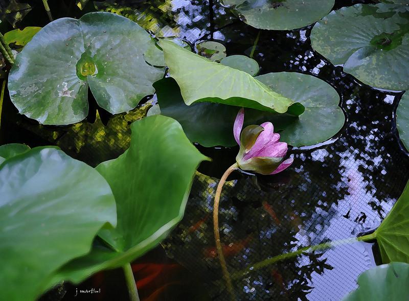 Lorraine's fish pond 6-27-2012.jpg