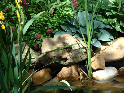 Pete's Pond