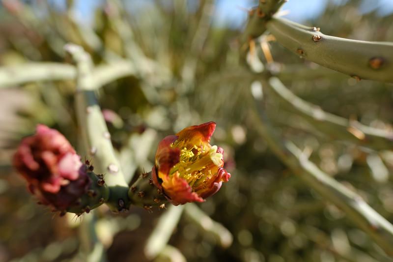 Tucson_17-754.jpg