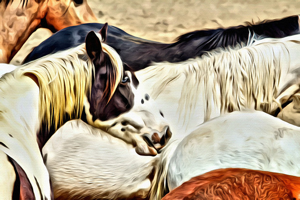 The Horses of Cowtown