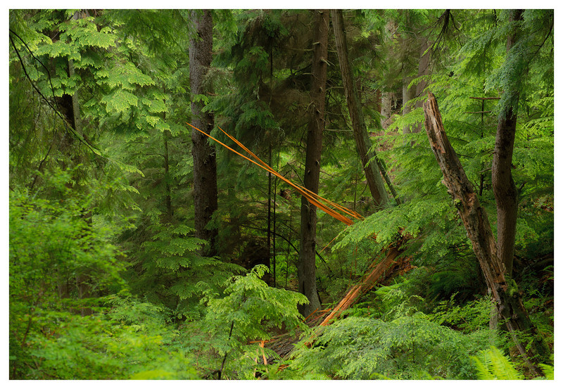 forest razor.jpg