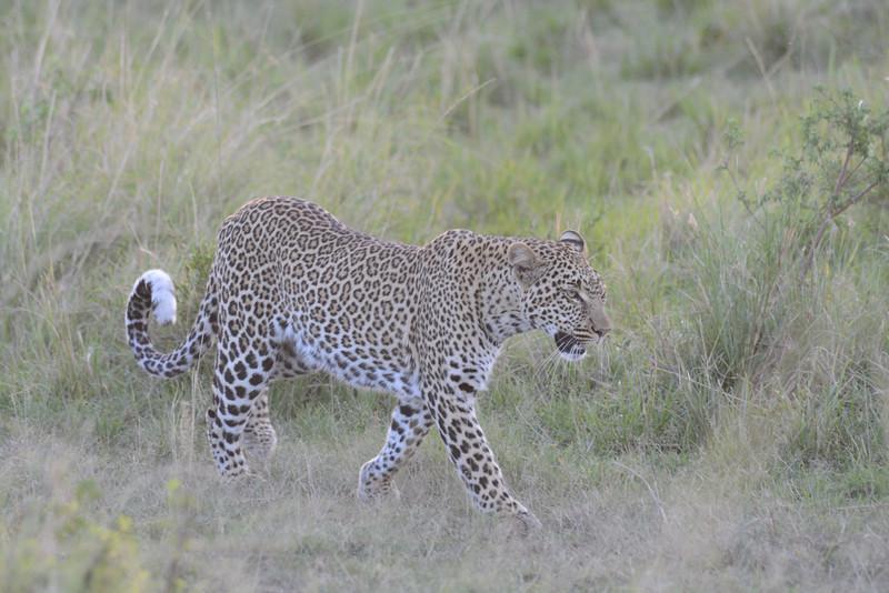 East Africa Safari 170.jpg