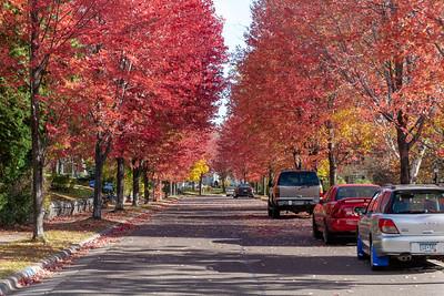 2020 10 13: Neighborhood Walk, Congdon Area, Up Hill
