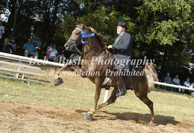 CLASS 4  AGED STALLIONS OPEN- CANTER