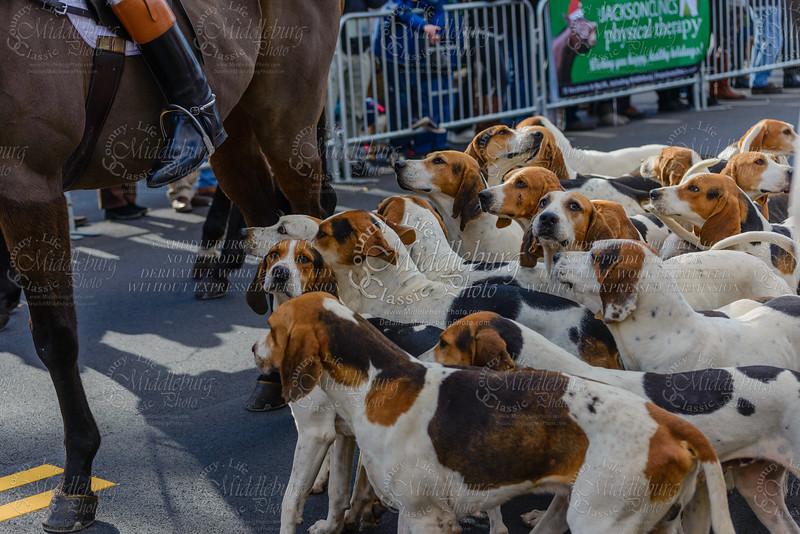Middleburg Hunt Parade