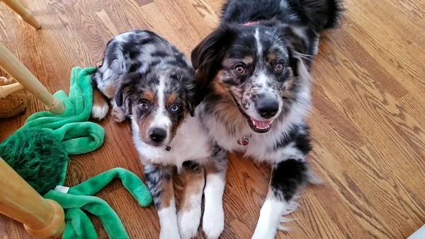 Rocky and Watson 2016