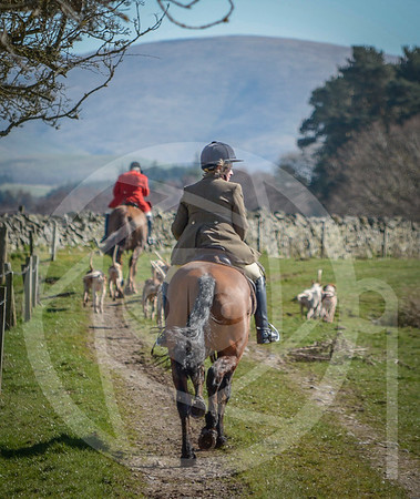 The Duke of Buccleuch Hounds March 2014