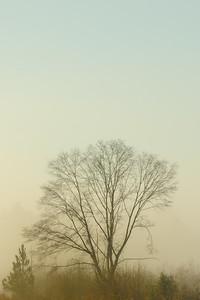 LTD_2011-12-29_0592