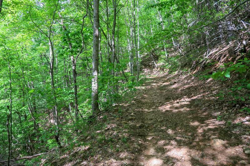 Green's Lick Trail -- 2,750'
