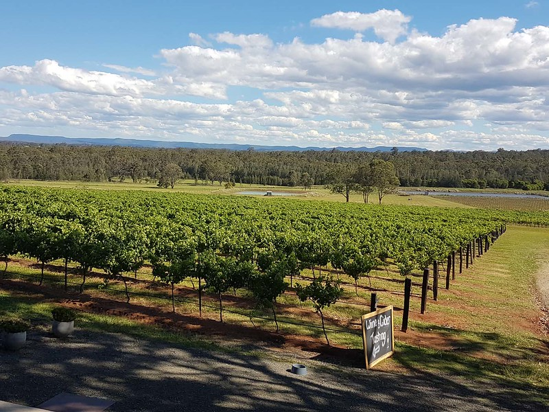 hunter valley wine region australia