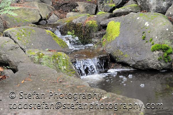 03-18-2012 Bellevue Botanical Gardens