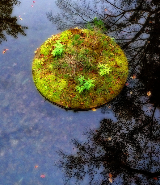 Pond2_Upload.jpg
