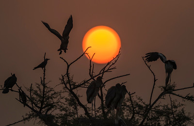 painted storks of bharatpur