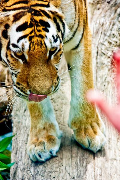 Animals_194.jpg