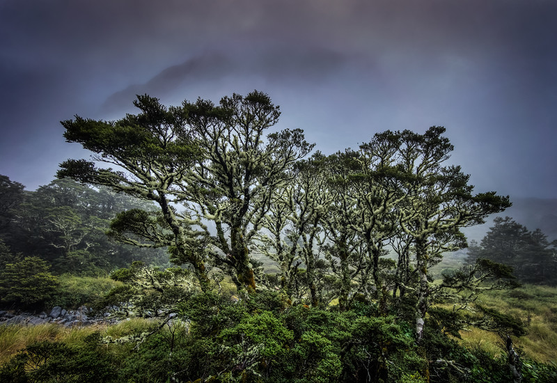 moody-trees-on-the-way-to-milford-sound-new-zealand.jpg