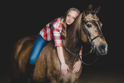 Equine Portrait Sessions