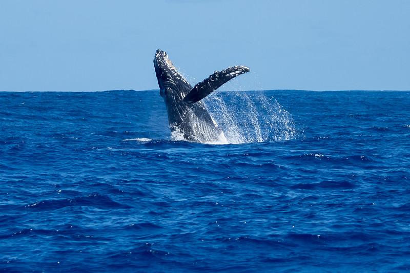 whales-leila-63.jpg