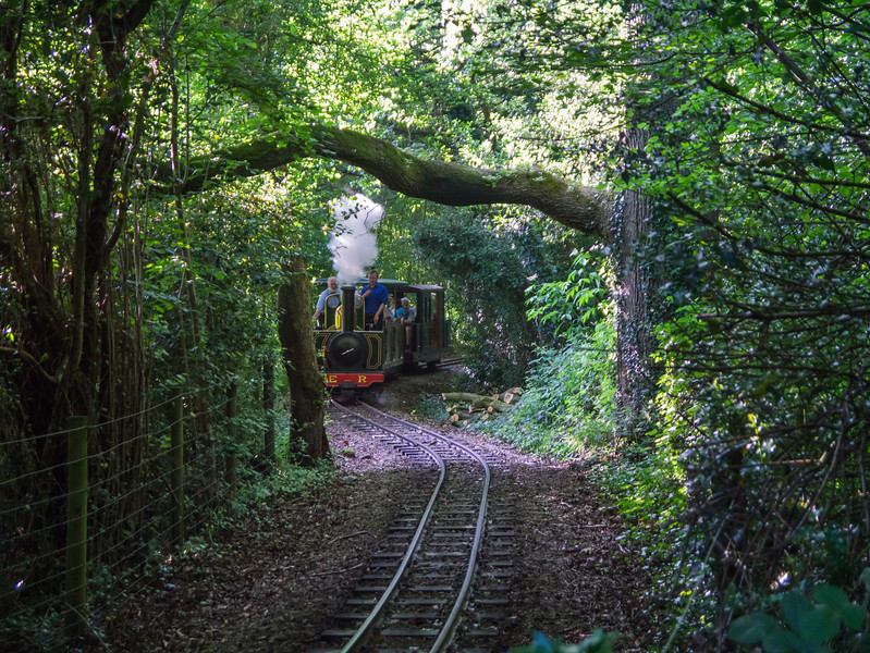 Driving the train though the woods