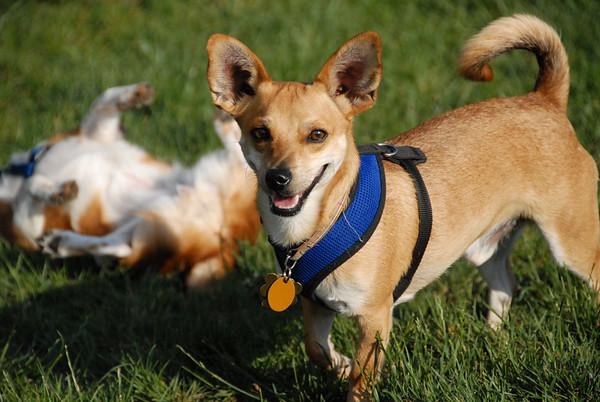 2010-06-03 Denville Dog Park