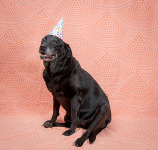 Sable Birthday
