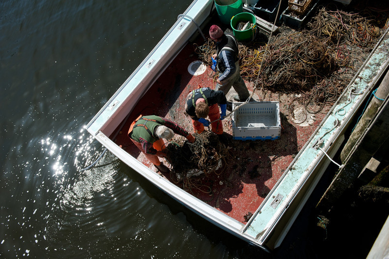 77. Derelict fishing gear recover for Gulf of Maine Lobsterman's Foundation.