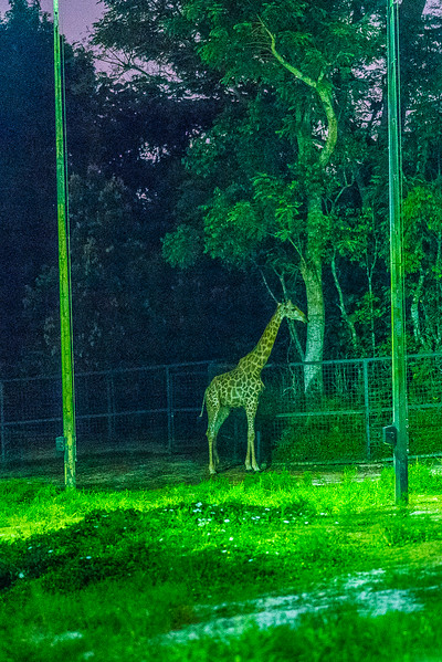 Night-Safari-9807.jpg